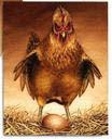 Pål sin høne?