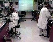 Selskapet Advanced Cell Technology Inc., som holder til i Massachusetts, har produsert cellene. (Foto: AP)