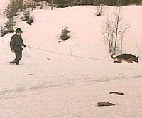 Hundesøket mellom Ulsåk og Hemsedal sentrum ga heller ikke i dag resultater.