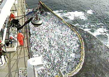 Makrellfiske i Nordsjøen. (Foto: NRK)