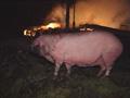 Fra en brann i Halden i januar