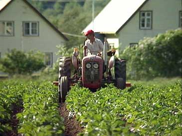 Landbruk i Lærdalsdalen. (Foto: Per Johan Grue, NRK)