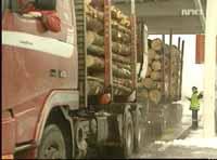 Lave priser på tømmer