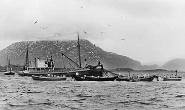 Storsildfiske ved Florø i 1954. Hjelpebåten er M/S
