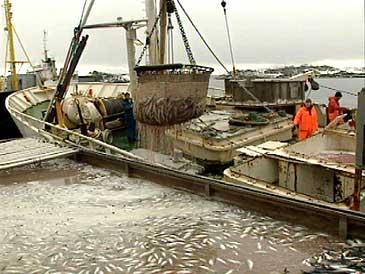 Lossing av sild ved Skaarfish sitt anlegg i 1993. (Foto: Atle Løkken, NRK)