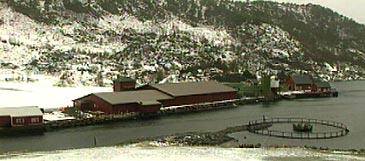 Haukå Settefisk ved Norddalsfjorden. (Foto: NRK)