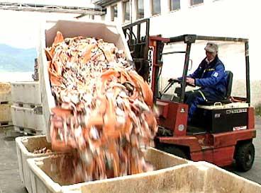 Fisk inngår i fôret som blir produsert her ved Gloppen Pelsdyrfôrlag. (Foto: Tor Sivertstøl, NRK)