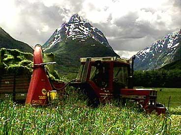 Fôrhaustar med landemerket Eggenipa i bakgrunnen. (Foto: NRK)