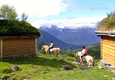 Elevane på Norsk Fjordhestgard får også prøva seg på rideturar i fjella kring Breim. (Foto: NRK)