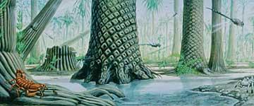 Denne fine tegningen har vi fått låne av Paleontologisk Museum i Oslo!