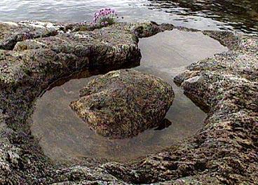 Berga ved Åfjorden ber preg av at det er hogd ut kvernsteinar. (Alle foto: Asle Veien, NRK)