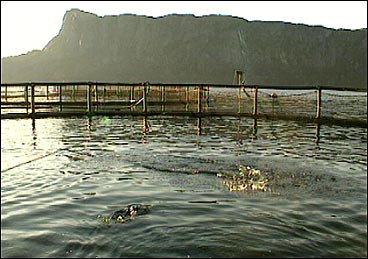 Mær i Åfjorden. (Foto: Heidi Lise Bakke, NRK)