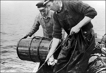 Krabbefiske på Storøy i 1950. Her er Karl og Jakob Storøy i ferd med å dra krabbeteiner. (Foto © Fylkesarkivet)