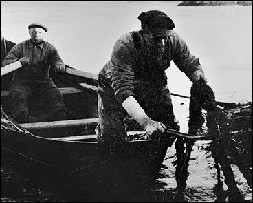 Endre Storøy (f. 1900) og Søren Storøy (f. 1927) skjer tare vest av Storøy i 1950. (Foto © Fylkesarkivet)