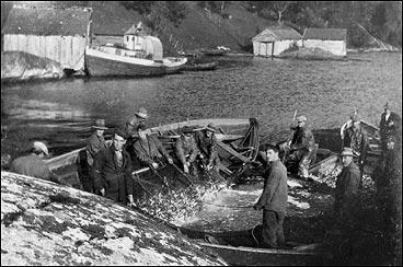 Sildefangst på Selvika kring 1930. (Foto © Fylkesarkivet)