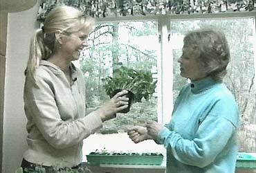 Basilikum i potte-her er det FBIs Elisabeth Grøndal som diskuterer temaet med Kirsten Lorange Østby.