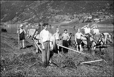 Arbeid med sleperive på Mindresunde jordbruksskule i 1945. Skulen vart starta i 1920. (Foto © Fylkesarkivet)
