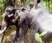 elefant dusjer bader