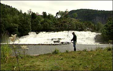 Laksefiskar ved Osfossen. (Foto: Randi Indrebø, NRK)