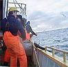 Fiskarane stikk av med for mykje av fortenesta, meiner Rolf Domstein. (NRK-arkiv)