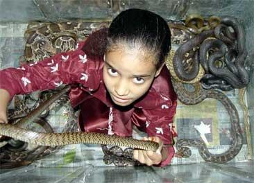 Jente i boks full av slanger under årets slangefestival Foto: Reuters/ Raj Patidar
