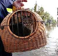 Et lite drama i det store. Katten Mickey blir evakuert i byen Bitterfeld nord for Dresden. Foto: Kai Pfaffenbach, Reuters.
