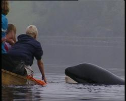 Det store spørsmålet er om hvorvidt Keiko skal ledes ut av Skålvikfjorden eller om han skal isoleres i et fjordområde.