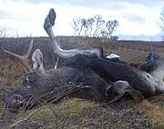 Alle skal få jakte i Finnmark som før, mener regjeringa.