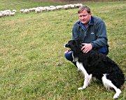 Gjeterhunden King etter en vellykket samling av saueflokken til bonde Jon Roar Grøstad.