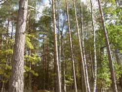 Frivillig vern av skog i Drangedal og Fyresdal.