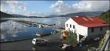 Agua Farms sitt anlegg i Risnesfjorden på Asheim. (Foto: Arild Nybø, NRK)