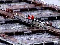 FHL Havbruk mener fiskeriministeren har det alt for travelt med å dele ut nye konsesjoner.
