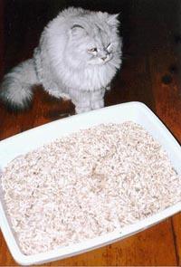 Kattesand kan brukes til mye...