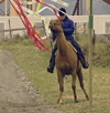 På banen skal hesten lære å gå forbi flagrende gjenstander, som plaststrimler