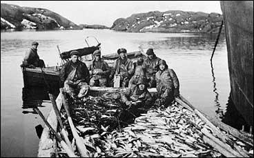 Sildefiske i Gulafjordane tidleg på 1930-talet. (Foto © Fylkesarkivet)