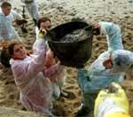 Frivillige rydder strendene for oljesøl. (Reuter)
