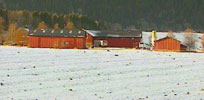 Det blåser hardt rundt eggbedriften Nårdgården i Orkdal.
