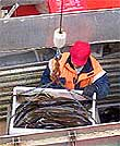 Fiskeleveranse Last Torsk Fiskebåt Sjark