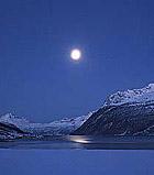 Elgen vandrer mer under fullmånen viser forskning.