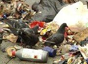 Folk stejler som ravner fra søppelfyllinga på Rødmyr