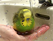 Tyfus elsker å bade