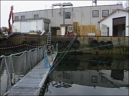 Bru Fiskeindustri er mellom verksemdene som har kutta aktiviteten. (Arkivfoto: Heidi Lise Bakke, NRK)