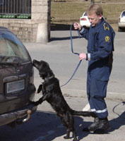 Narkohunden Dusty i aksjon. (arkiv)