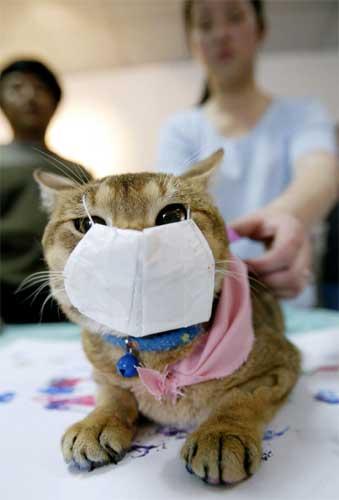 På Taiwan utstyrte en katteeier sitt kjæledyr med munnbind. (Foto: Reuters)