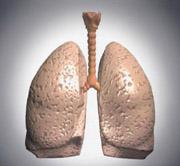 Modell av lunge