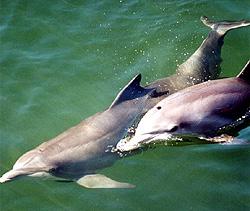 Delfiner er fasinerende dyr. Foto: Camilla Neset