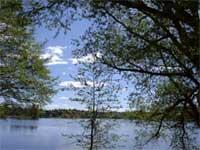 Blågrønnalger som produserer giftstoffer har inntatt Mosseelva og Vanemfjorden.