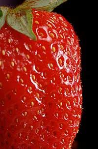 Slik vi aller helst vil ha jordbæra. Rød og saftig.