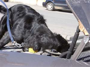 En narkohund i Valdres hadde vært til god hjelp, mener Lions og politiførstebetjenter.