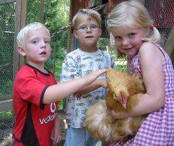 F.v. Sivert Dahler, Tarje Rusten Wang og Emilia Brox, alle fem år, er godt fornøyd med at barnehagen har fått høner. (Foto: Freddy Fagerheim)
